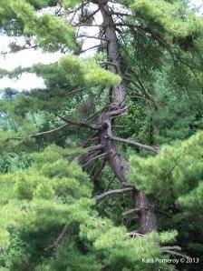 sumi_tree