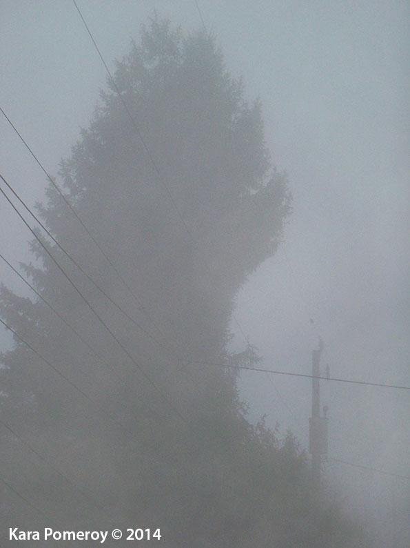fogmonster